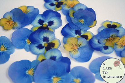 "24 blue and yellow wafer paper edible pansies, 1.5"" - 2"""