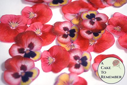 24 red edible flowers for cakes, pansies.