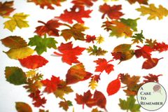 "48 small edible autumn leaves for cakes, .5"" to 1.5"" wide. Color on both sides"