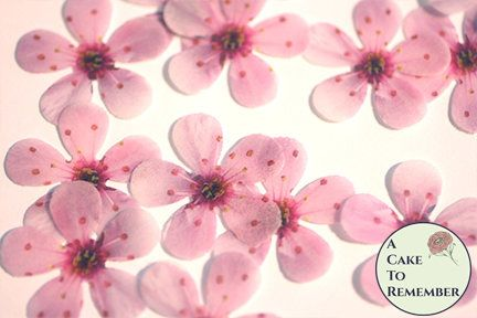 48 wafer paper pink cherry blossoms for cupcake toppers