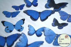 12 large royal blue wafer paper edible butterflies
