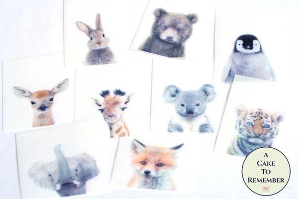 Baby animals edible wafer paper cookie decorations