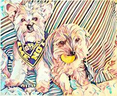 Dixie's Dogs