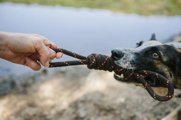 Tug Rope Toy by P.L.A.Y