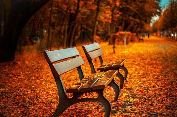 Autumn Breeze**