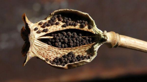 Black Opium (YSL type)