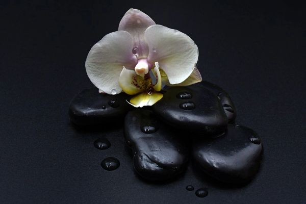 Black Orchid (for women-Tom Ford type)