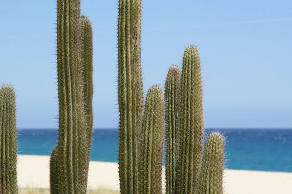Cactus & Sea Salt
