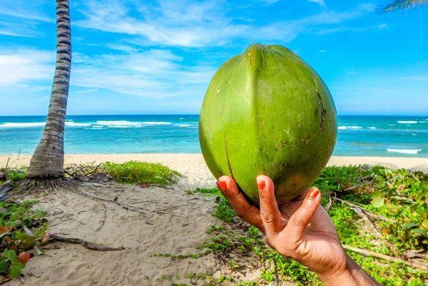 Calypso Coconut**