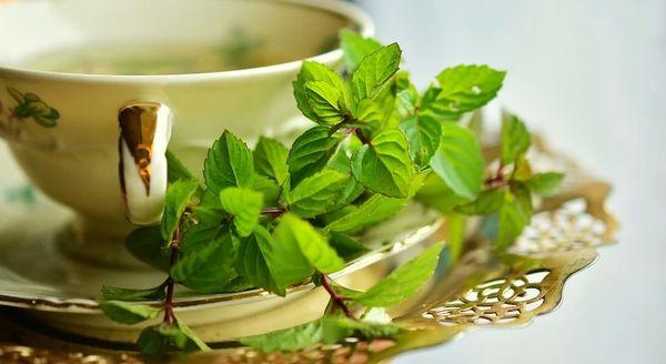 Green Tea & Willow