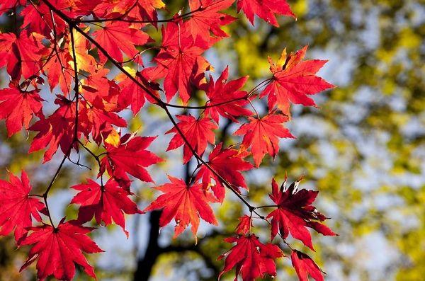 Leaves (type)