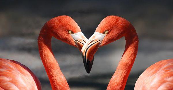 Lovers (LUSH 1000 Kisses type)
