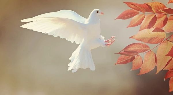The Dove (compare to Lush Olive Branch)