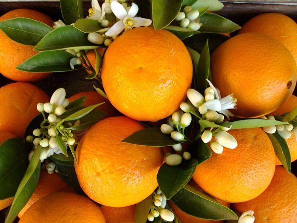 Orange Blossom (compare to Jo Malone) (PLTM)
