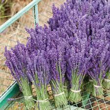 French Cade Lavender (compared to Voluspa) (PLTM)