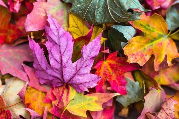 Autumn (compare to BBW)