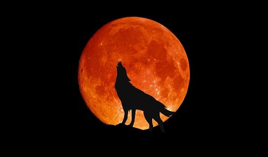 Howling at the Moon **
