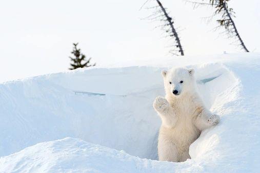 I'm Snow Cute! **