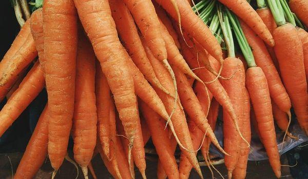 Carrot (PLTM)