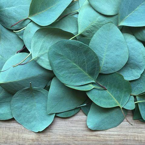 Eucalyptus & Sea Salt