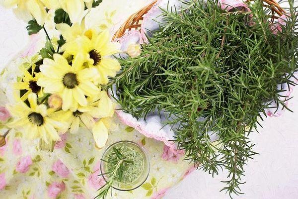 Verbena Rosemary (PLTM)
