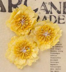 Prima large flowers Sunshine