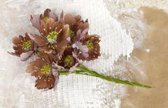 Prima COCOA Blooms