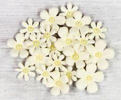 Pearl Gypsies Classic flowers