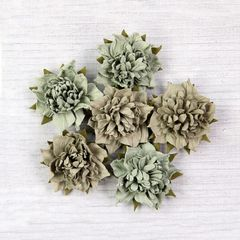 Camelia Sage flowers