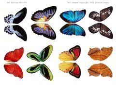 1008 Butterfly Wings