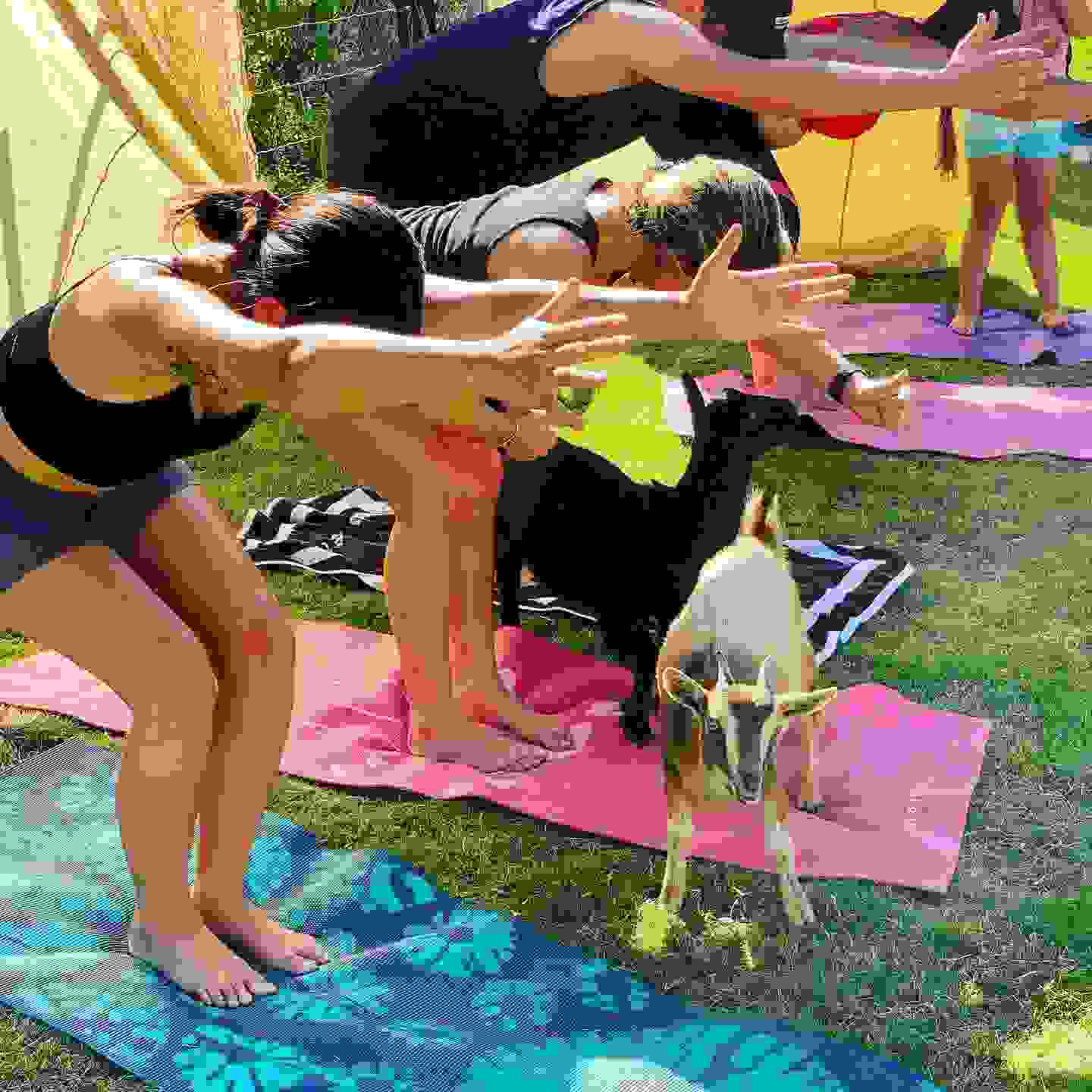 San Diego goat yoga, Ramona goat yoga, things to do in San Diego, things to do in Ramona