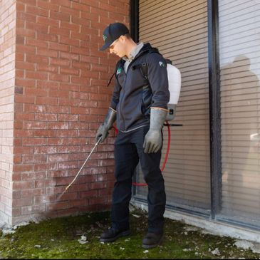 Technician with a backpack sprayer