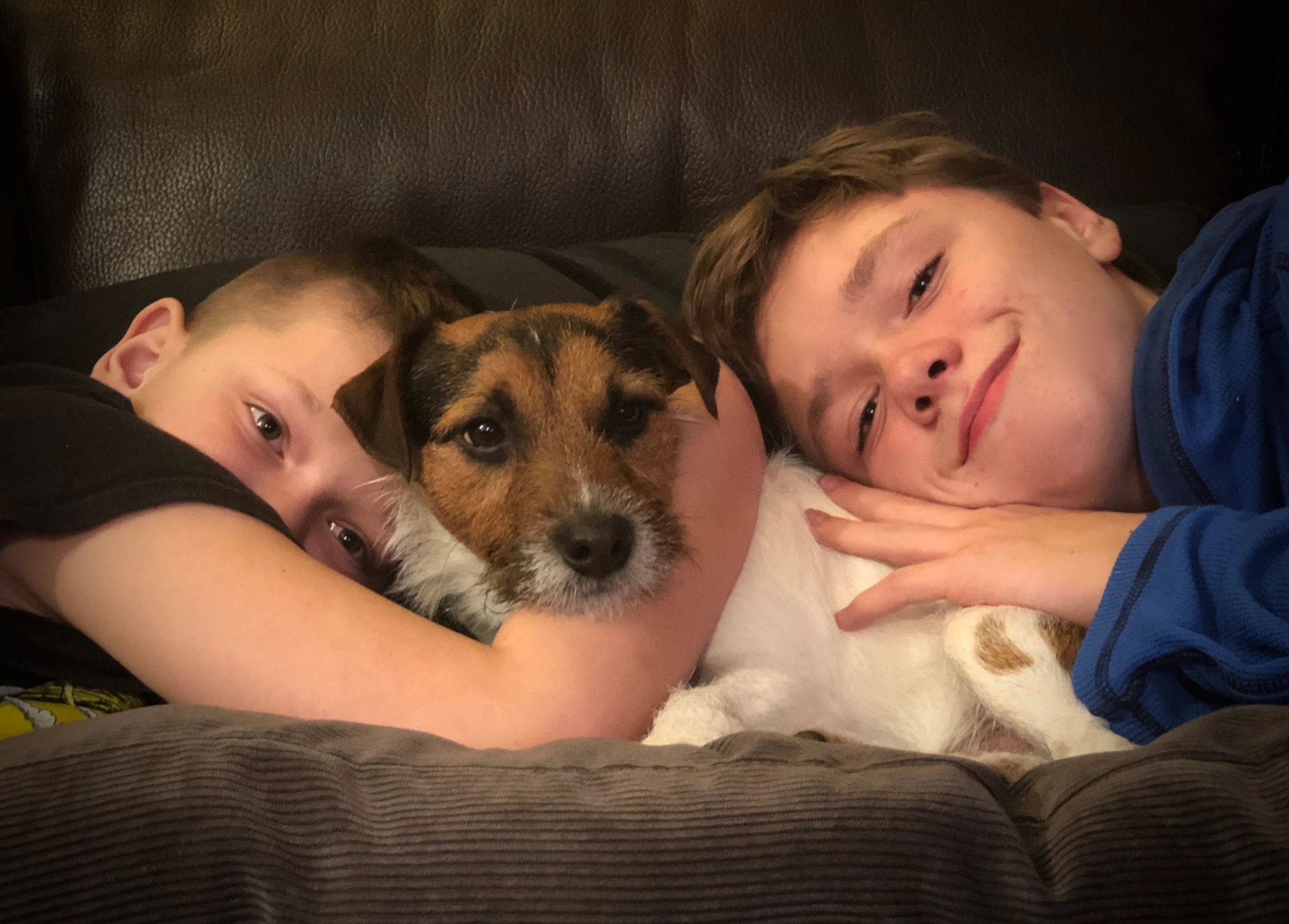 Jack Russell Terriers Braveheart Jack Russell Terriers Braveheart Jack Russell Terriers