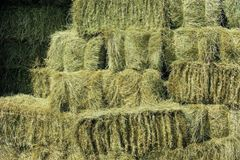 Shorefields Fresh Meadow Hay, Horse Hay, large bale, approx 17kg-22kg, 100cmx50cm x40cm, delivered free in a large reusable bag.