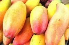 【香甜可口】巴西象牙小芒果5颗