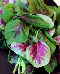 Local Fresh Red Spinach 1 lb 本地红苋菜苗1磅
