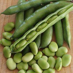 Fresh Broad Bean 2lbs/bag 天然带壳蚕豆2磅袋
