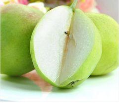 Yulu Fragrant Pears 山西特供玉露香梨