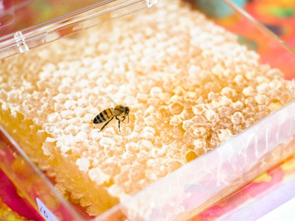 Honey_Jasmine Honey Comb 400g box 蜂巢蜜 400克盒