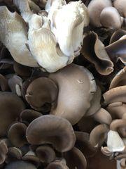 Veg.o_Local Organic Oyster Mushroom 225g 本地有机蠔菇0.5磅