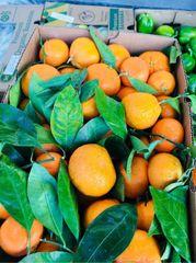 California Sweet Mandarin 加州易剥皮带叶小蜜橘2磅