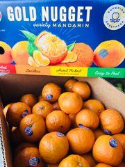 Golden Nugget Mandarin 2 lbs加州无籽丑橘2磅袋