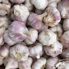 Veg.o_ organic Garlic 本地认证有机俄罗斯红大蒜