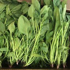 【最新到店】Veg._ Fresh Spinach with roots 1 lb 台湾有根菠菜一磅