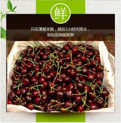 【中国直邮】BC本地8.5-9ROW特大红樱桃4斤箱