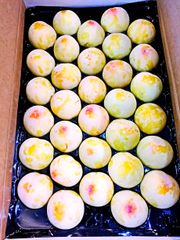 Pro_Air Fresh California Pluot Golden treat 10 pcs加州大甜绿李子10颗袋