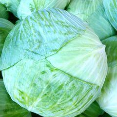 Taiwan cabbage 高丽菜(台湾产)