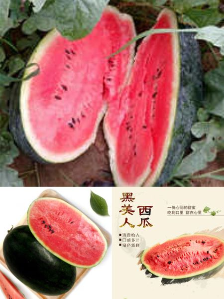 Local organic black beauty watermelon本地认证有机黑美人西瓜