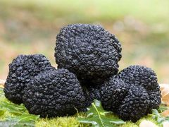 Fresh Italy black truffle 空运意大利新鲜黑松露