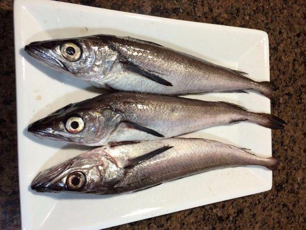 Local wild Cod野生新鲜小鳕鱼